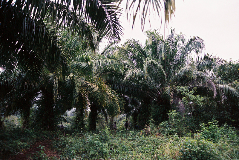 The jungle surrounding the Gathering.