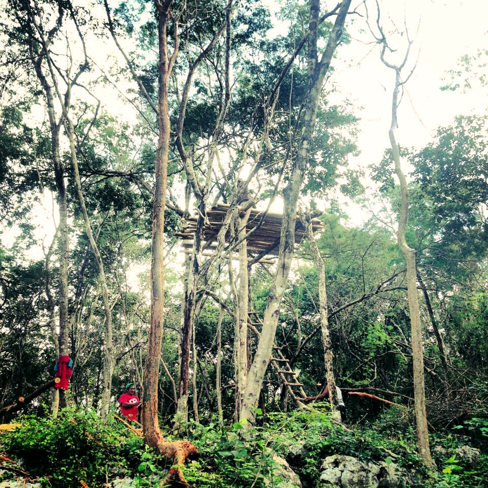 New Lemurian Embassy tree house / watch tower platforms with an incredible view of the jungle.