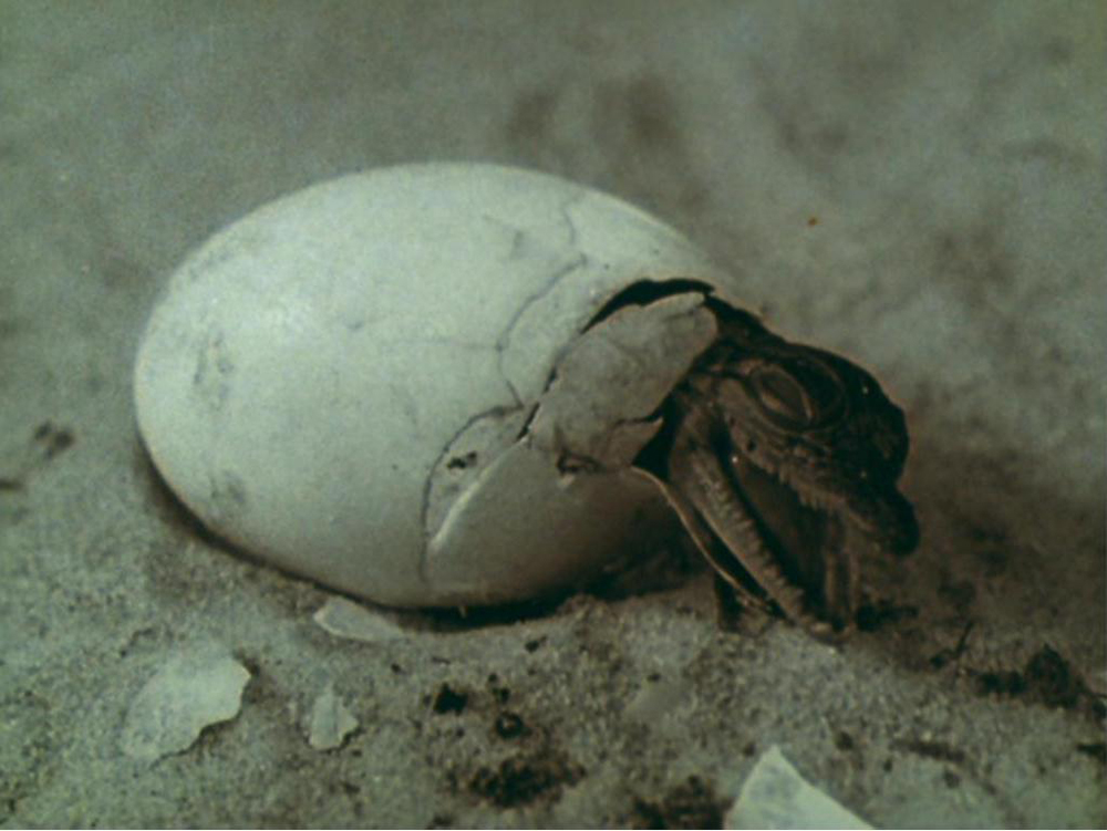 Birth of a lizard. A still from Lucifer Rising (1966-1980), a film by Kenneth Anger. Colour, 16mm, 28mins.