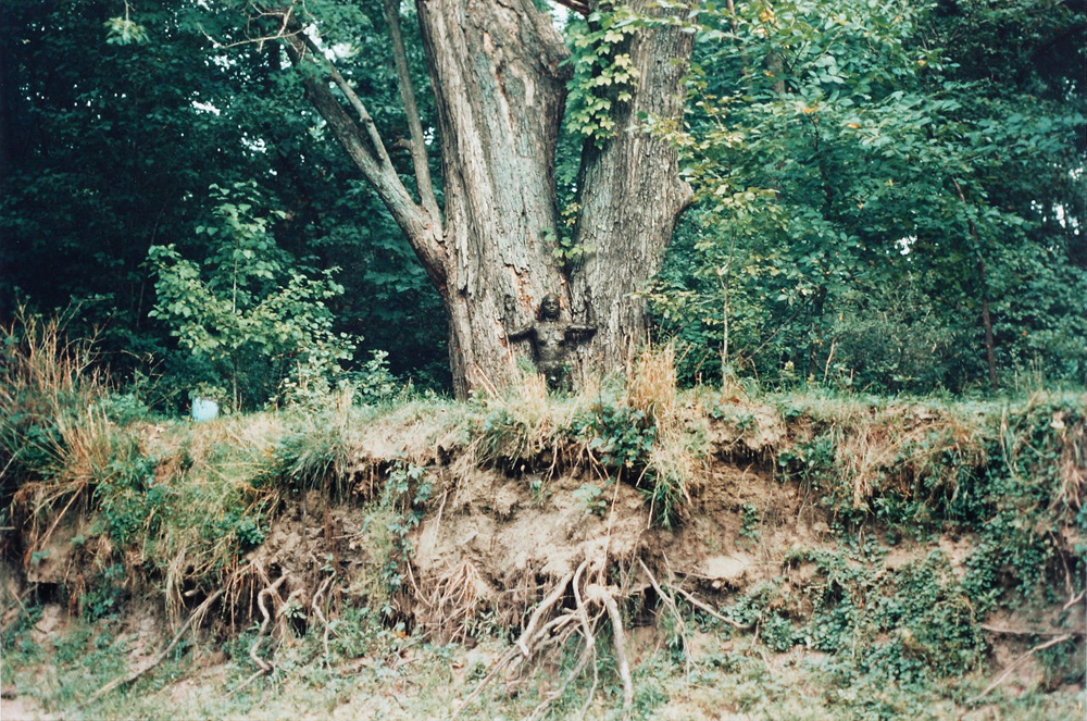 Arbol de la Vida (Tree of Life) (1976–9) by Ana Mendieta. Photographed at Old Man's Creek, Iowa City, Iowa. Colour Photograph