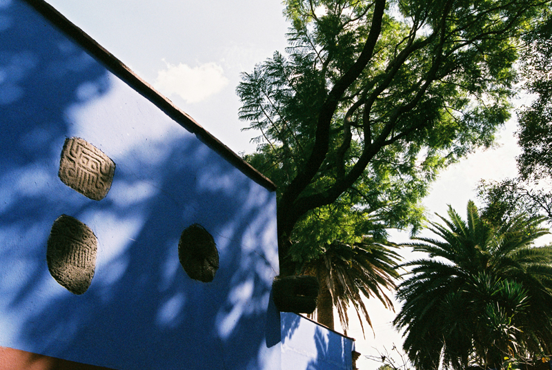 The grounds surrounding the Casa Azul.