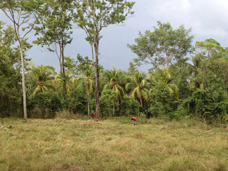 Jungle times - the camping area for the festival.