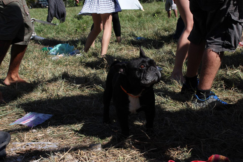A dog at the main stage of Popol Vuh Festival.
