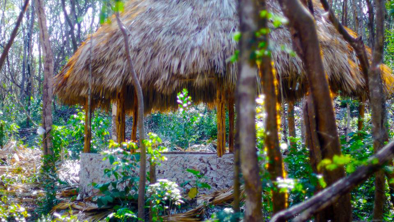 Arriving in to Lemurian Land in the Mayan jungle of Yucatan