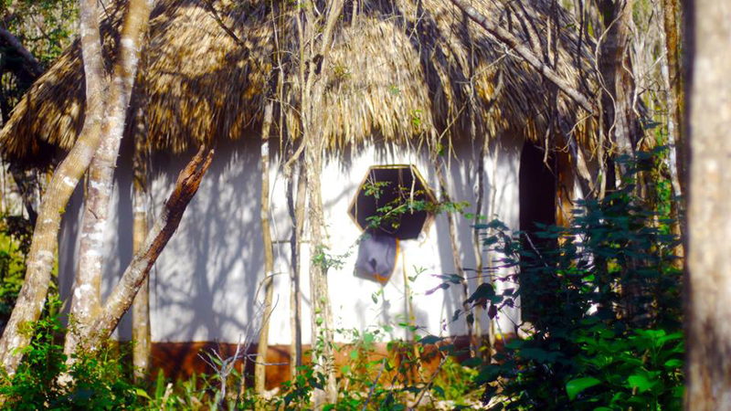 Temple Palapa under the shadow of an Ancient Maya Jungle