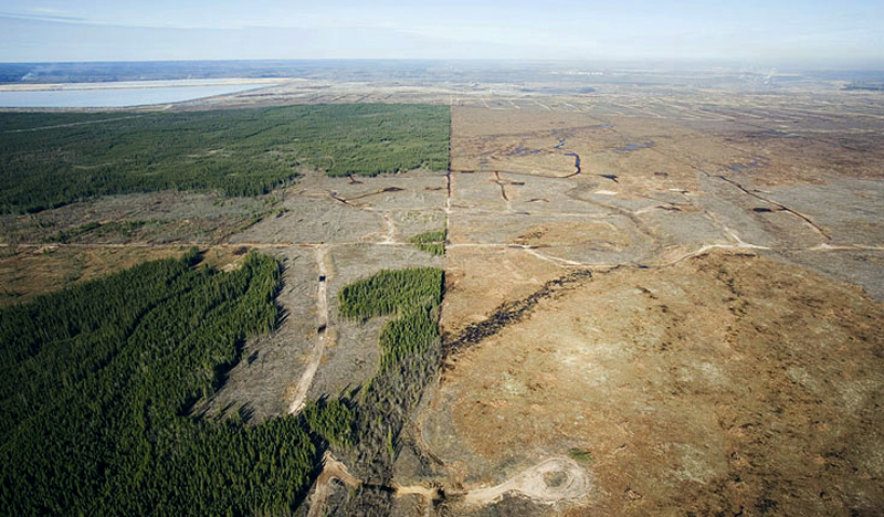 The Third Eye Magazine_Canada_Alberta_Chopped-down-Boreal-forest--1
